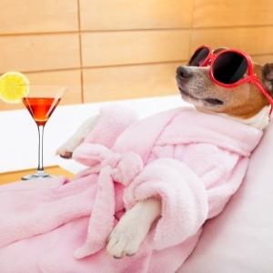 Pet Spa Dubai | HomeGenie®