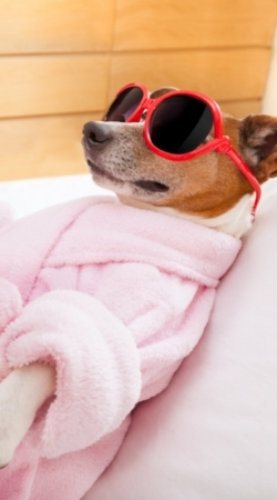 Pet Spa in Dubai | HomeGenie®