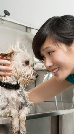 Pet Grooming Services in Dubai   HomeGenie®