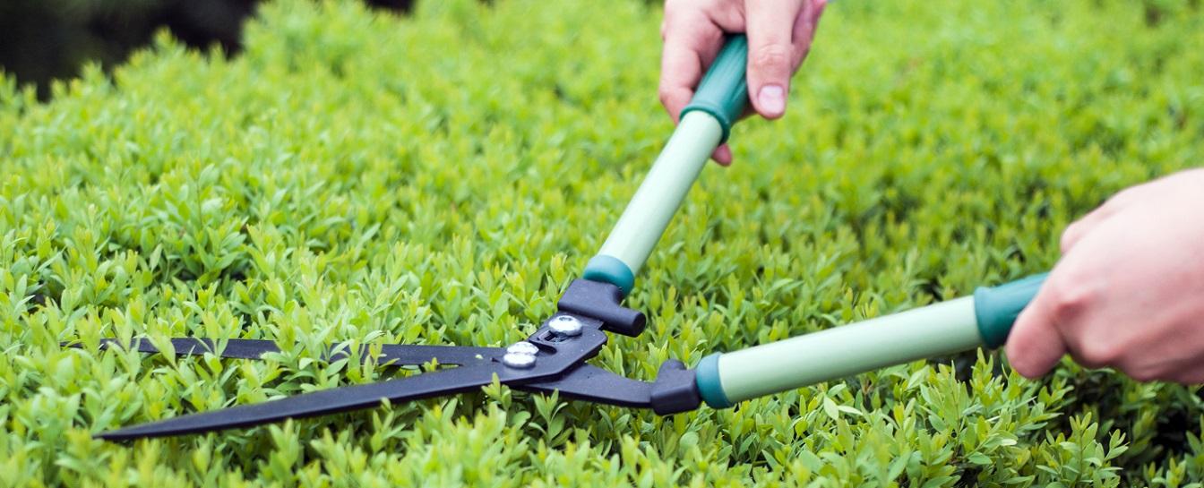 Garden pruning or trimming