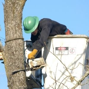 Tree stump removal services in Dubai
